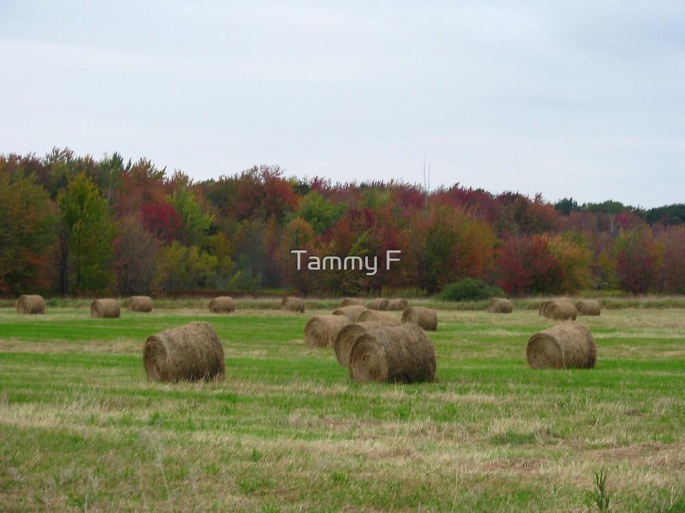 Last Cut of Hay by Tammy F