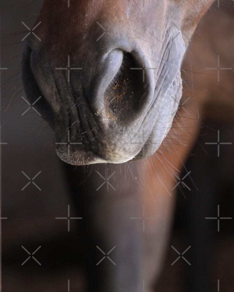 Horse Muzzle by Rachel Leigh