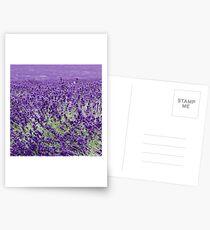 Lavender in motion Postcards