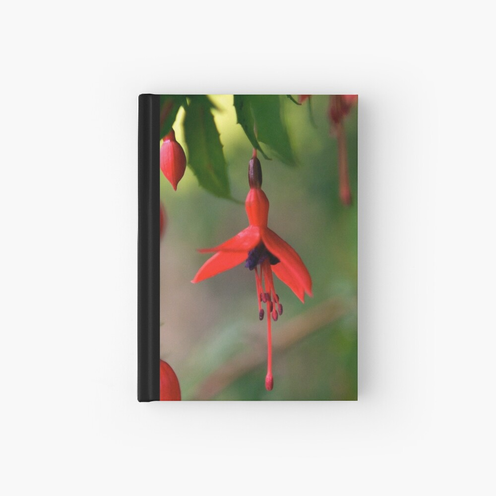 Single Wild Fuchsia Flower, Loch Na Fooey Hardcover Journal