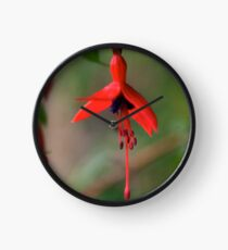 Single Wild Fuchsia Flower, Loch Na Fooey Clock