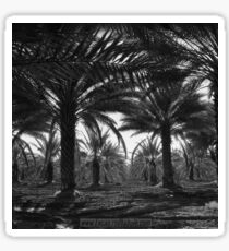 Palms Orchard Sticker
