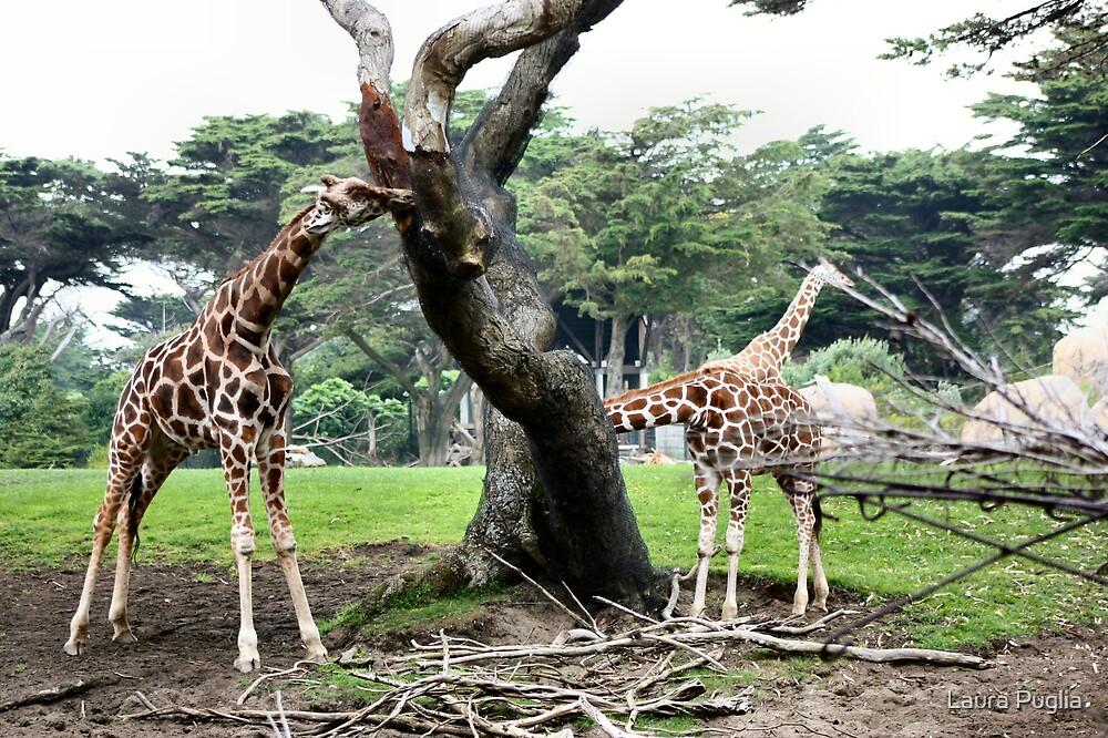 Giraffes by Laura Puglia