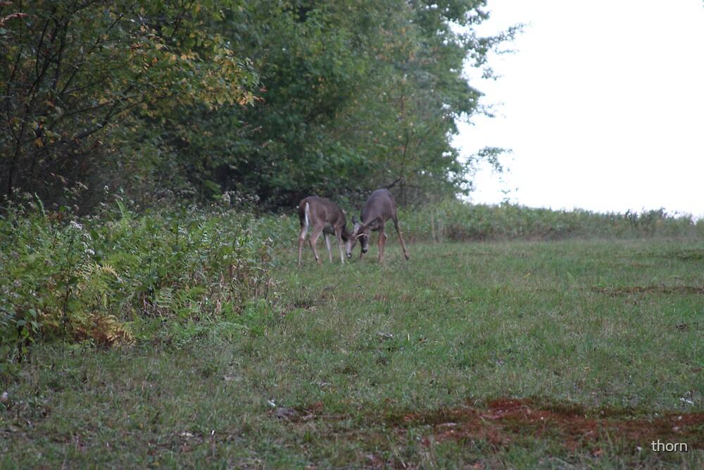 WV Deer by thorn