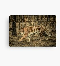 Rustic Majestic Tiger in the Wild Canvas Print
