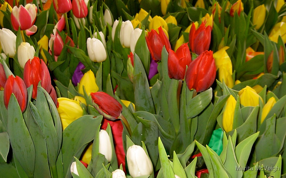 Tulips by Marita McVeigh