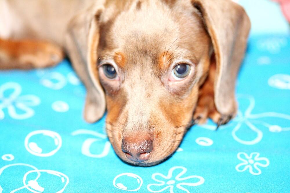 Doggy Love I by chrishawns