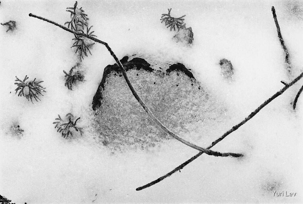 Haiku by Yuri Lev
