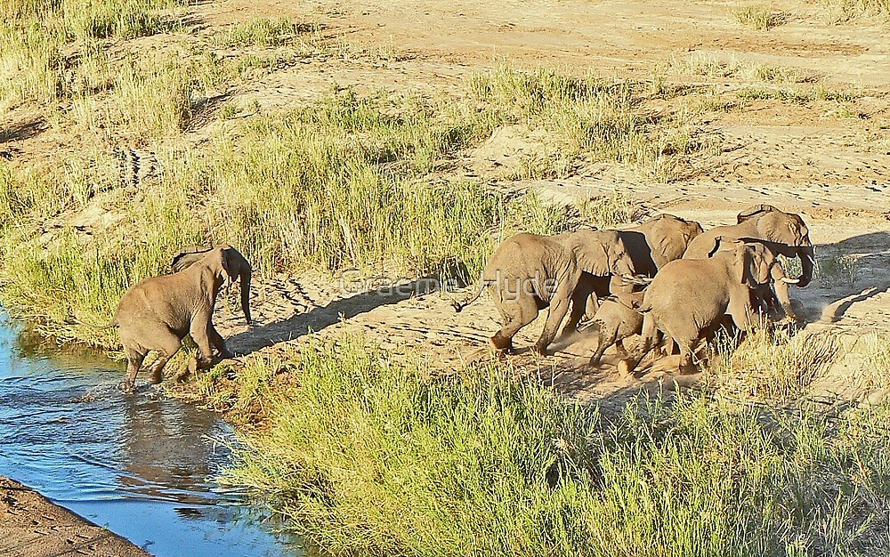 Elephants on the Move by Graeme  Hyde