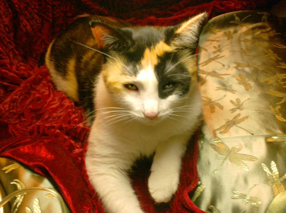 Calico by Christy Taylor