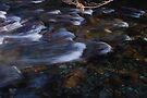 Magpie: Still Waters Run Deep by DonDavisUK