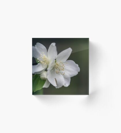 White Spring Flowers Acrylic Block