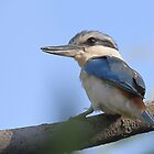 Red-backed Kingfisher by Carole-Anne