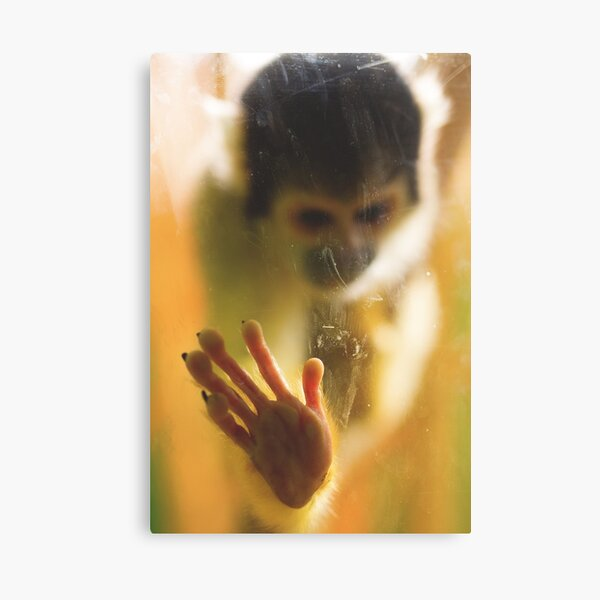 Bolivian Squirrel Monkey Canvas Print