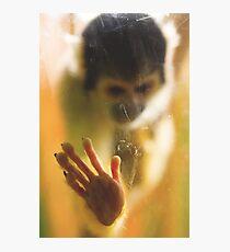 Bolivian Squirrel Monkey Photographic Print