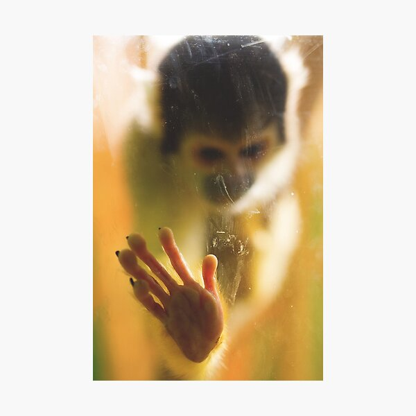 Bolivian Squirrel Monkey Photographic Print