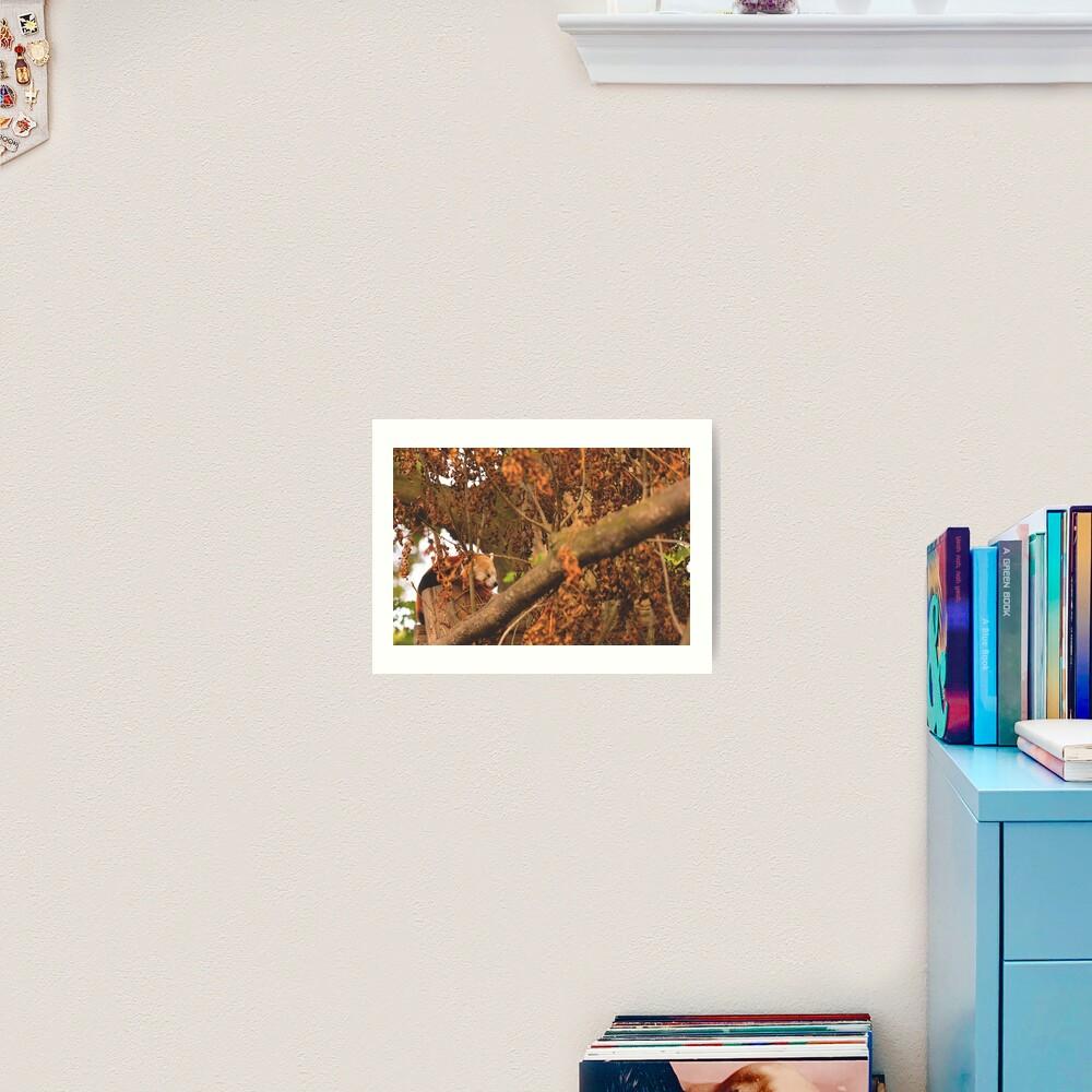 Red Panda Sleeping Art Print