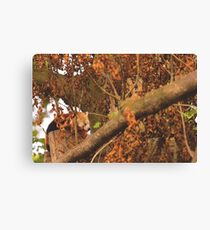 Red Panda Sleeping Canvas Print
