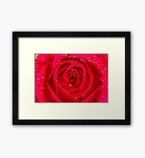 Rose Macro Framed Print