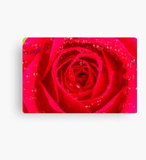 Rose Macro Canvas Print