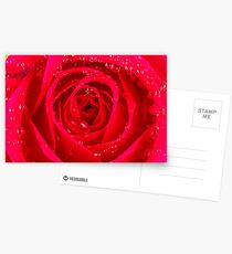 Rose Macro Postcards