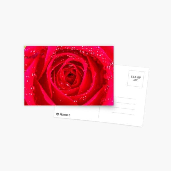 Rose Macro Postcard