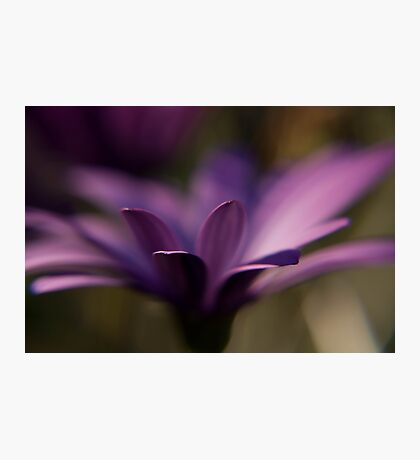 a thing of beauty is a joy forever Photographic Print