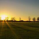 Sunset in the Phoenix Park, Dublin by IAmPaul