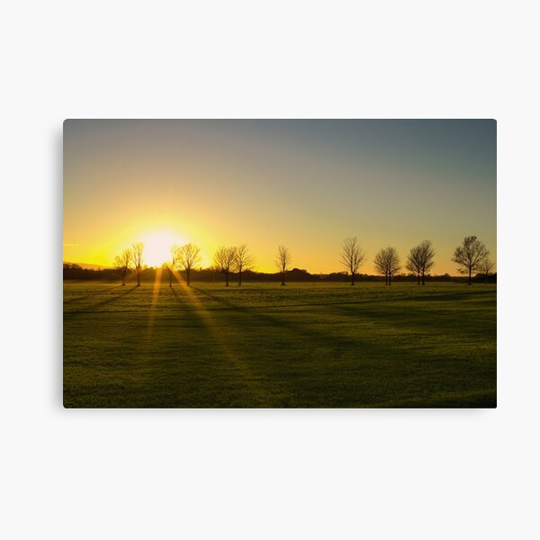 Sunset in the Phoenix Park, Dublin Canvas Print