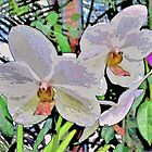 Orchid Abstract by Margaret Stevens