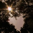 Heart in the Trees by Chanel70