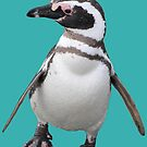 Magellan Penguin, Patagonia, Chile  by Jane McDougall