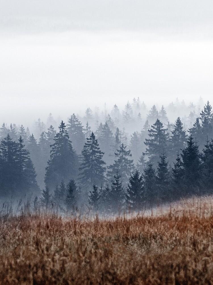 Lost In Fog by tekay