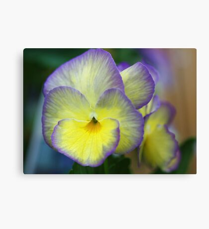 Viola -- Not Just Another Pretty Face Canvas Print