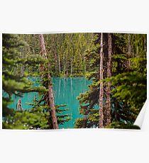 Lesser Lake Garibaldi Through the Trees Poster
