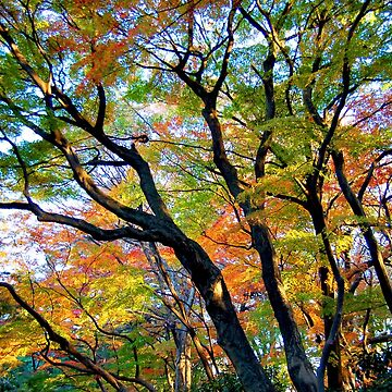 Beautiful Autumn Trees by WaterGardens