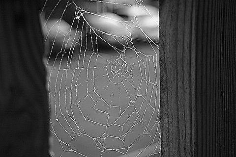 Sticky Web by cherrypiex
