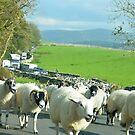 Malham sheeplock by apple88