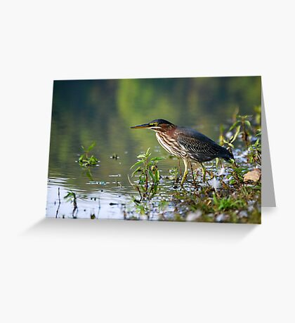 Lake Bird fishing for lunch Greeting Card