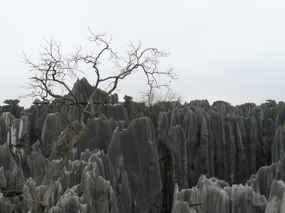 Stone Forest by carlylou