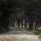 The Buffalo Road by Wayne King