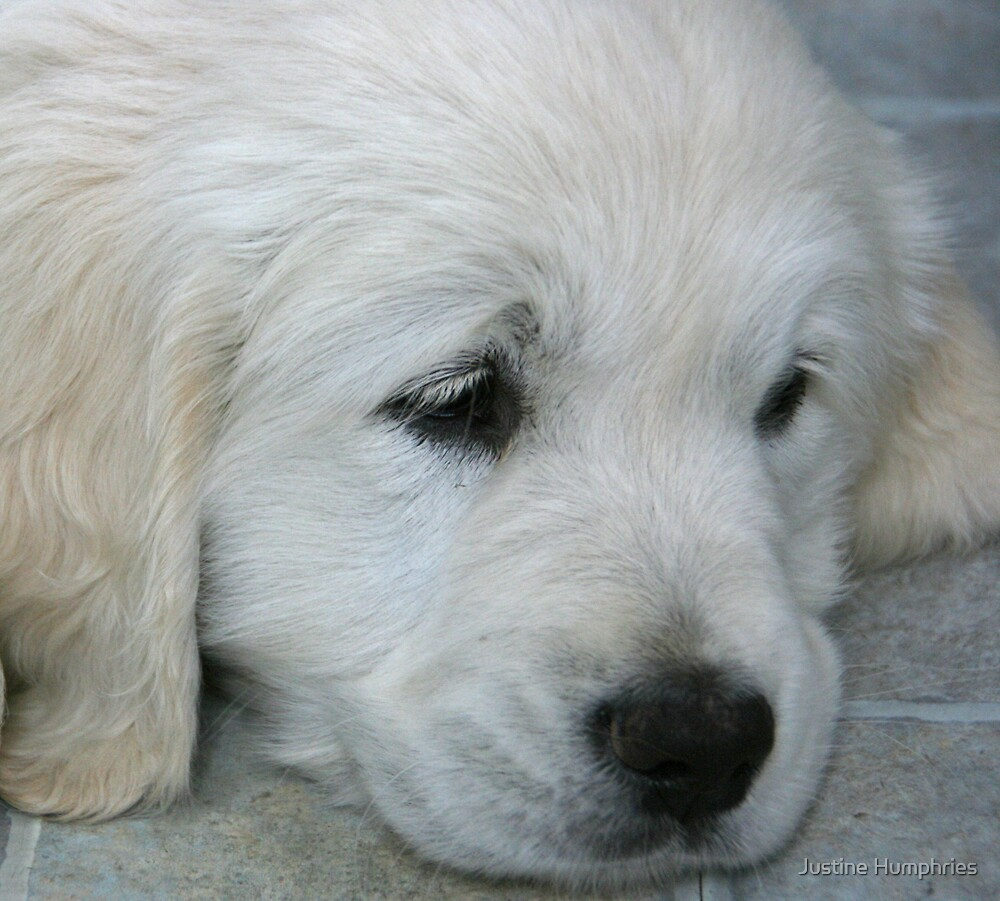 """""""It's such a hard life being a puppy!"""" by Justine Humphries"""