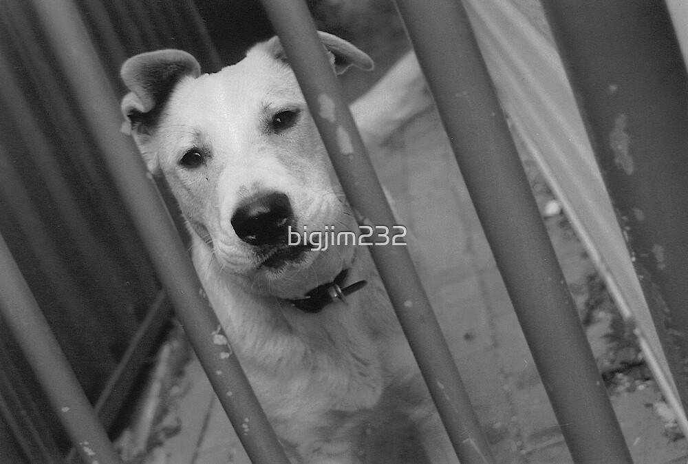 Dog Behind Fence 1 by bigjim232