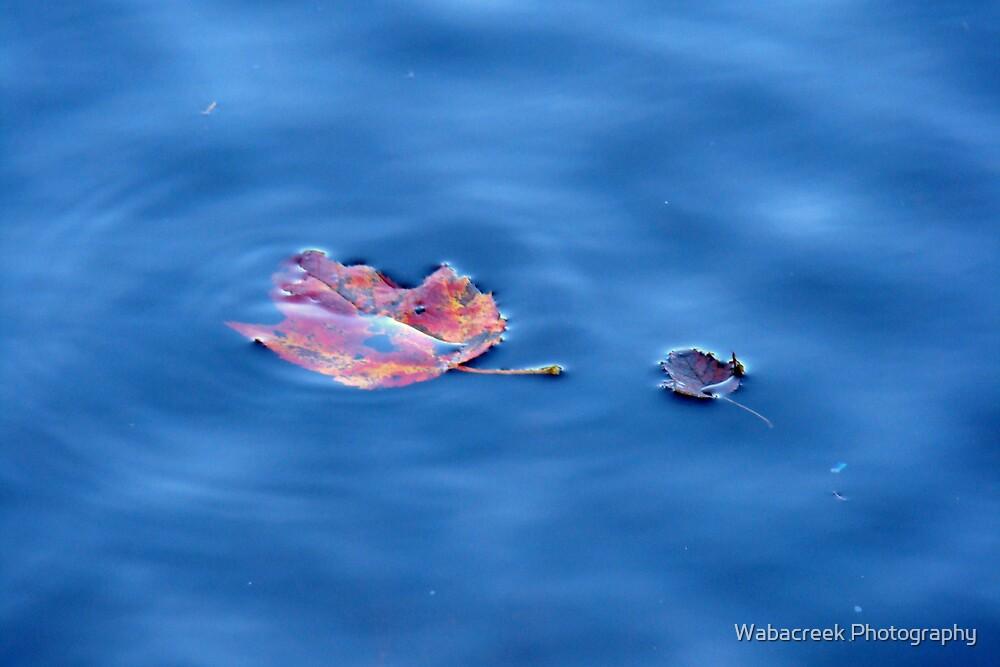 Floating away by Jocelyne Phillips