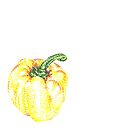Yellow Pepper by Claire Robinson