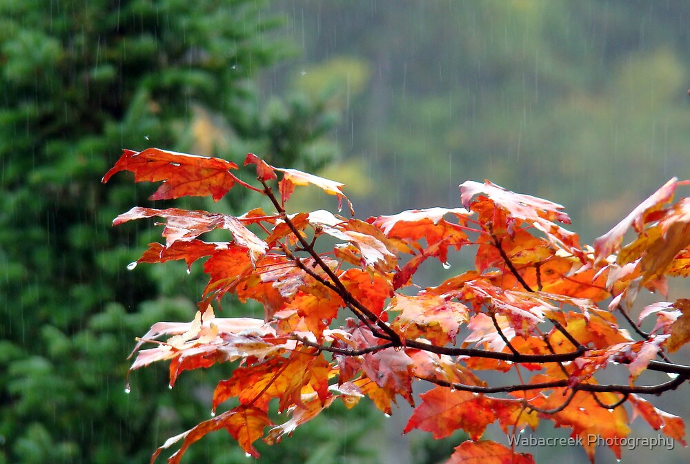 Autumn Rain by Jocelyne Phillips