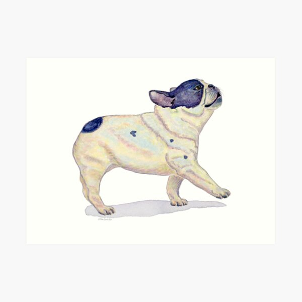 French Bulldog, Black and White, French Bull Dog, Watercolor Painting Art Print