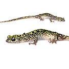Green Salamander - whitebox by Dave Huth