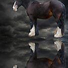 Dark Horse by Sandra Willis