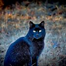 Black Cat Looking at me by TJ Baccari Photography
